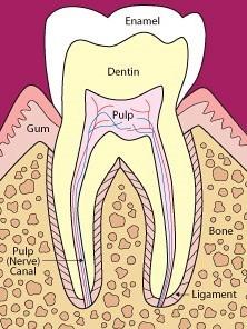 پر کردن دندان با مواد همرنگ آن
